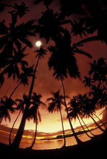 French Polynesia Sunset shot through palm trees von Danita Delimont
