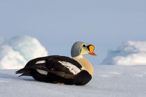 Arctic Alaska von Danita Delimont