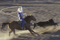 Big Timber Cowboy rides horse in calf-roping rodeo competition (motion) von Danita Delimont