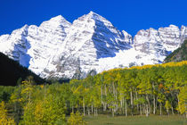 Maroon Bells with autumn aspen forest by Danita Delimont