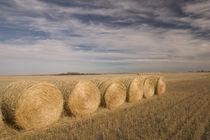 Craik: Hayrolls / Autumn and Prairie Landscape by Danita Delimont