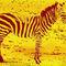 Zebra03