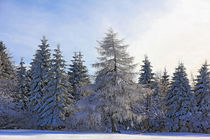 Natur im Winter by Wolfgang Dufner