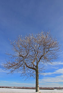 Baum im Winter by Wolfgang Dufner