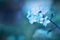 Blütentraum in Blau von fraudoktor