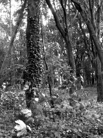 graveyard forest I by Oliver Metz