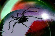 Arachnosphäre. by Bernd Vagt