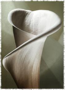 Calla Lily Deco von Cesar Palomino