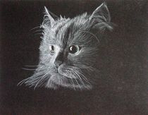 Cat on Black by Brandy House