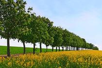 Blütenzeit von Wolfgang Dufner