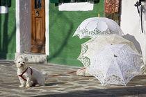 Ral-raffaellalunelli-burano10-ombrelli-cane