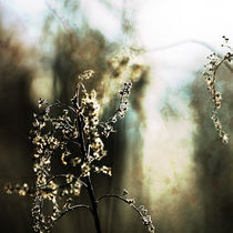 winter light #2 von Eva Stadler