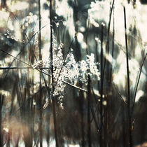 winter light #1 by Eva Stadler