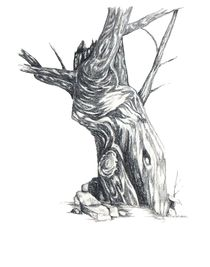 Oldtree-8-x-10