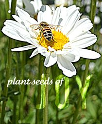Plant Seeds of Joy Daisy by Patricia N