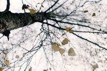 Autumn von Gytaute Akstinaite