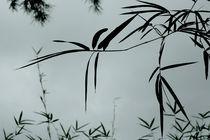 bamboo by Vsevolod  Vlasenko