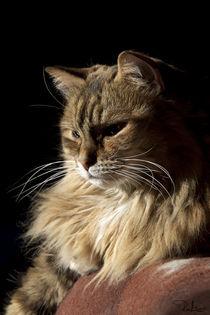 Ral-raffaellalunelli-cat-ghiga-meditazione
