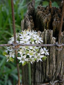 Fence and Flower von Warren Thompson