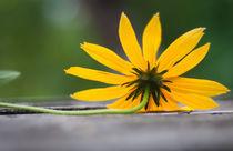 Flower by Victoria Savostianova