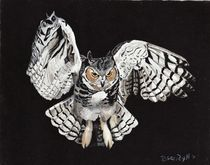 Screech Owl by Brandy House
