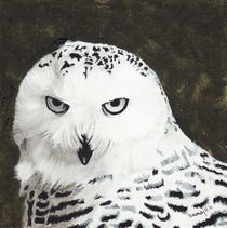 Snowy Owl by Brandy House