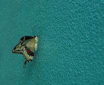 Swallow-tail-butterfly-1