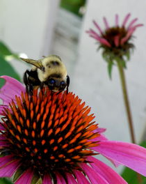 Busy as a Bee by Lainie Wrightson