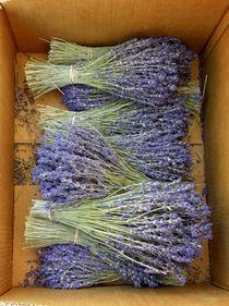 Lavender Bundles by Lainie Wrightson