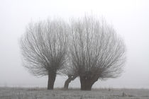 Kopfweiden bei Frost und Nebel 28 by Karina Baumgart