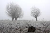 Kopfweiden bei Frost und Nebel 27 by Karina Baumgart