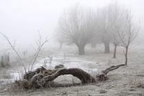 Kopfweiden bei Frost und Nebel 22 by Karina Baumgart