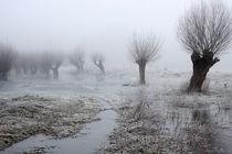 Kopfweiden bei Frost und Nebel 16 by Karina Baumgart