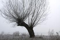 Kopfweiden bei Frost und Nebel 15 by Karina Baumgart