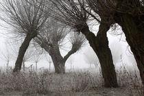 Kopfweiden bei Frost und Nebel 14 by Karina Baumgart