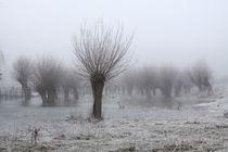Kopfweiden bei Frost und Nebel 11 by Karina Baumgart