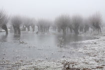 Kopfweiden bei Frost und Nebel 10 by Karina Baumgart