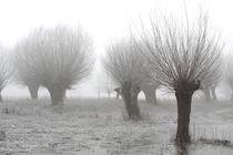Kopfweiden bei Frost und Nebel 08 by Karina Baumgart