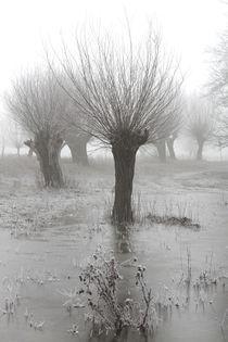 Kopfweiden bei Frost und Nebel 07 by Karina Baumgart