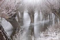 Kopfweiden bei Frost und Nebel 06 by Karina Baumgart