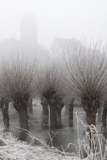 Kopfweiden bei Frost und Nebel 02 by Karina Baumgart