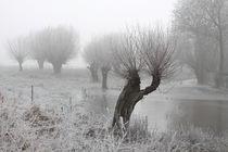 Kopfweiden bei Frost und Nebel 01 by Karina Baumgart
