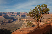 Canyon tree alive by Alexander Weigel