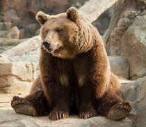 Funny bear by Victoria Savostianova