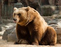 Smiling bear by Victoria Savostianova