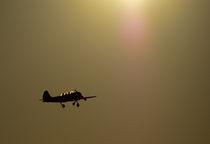 The flight by Victoria Savostianova