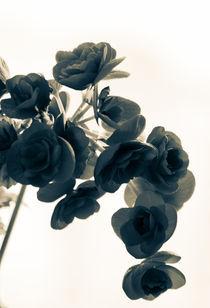 Flower silhouette by Victoria Savostianova