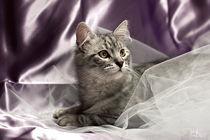 Ral-raffaellalunelli-cat-je-lilla
