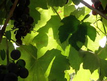 Shadow Dancing Grapes von Lainie Wrightson