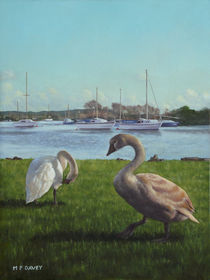 Painting-swans-christchurch-flat